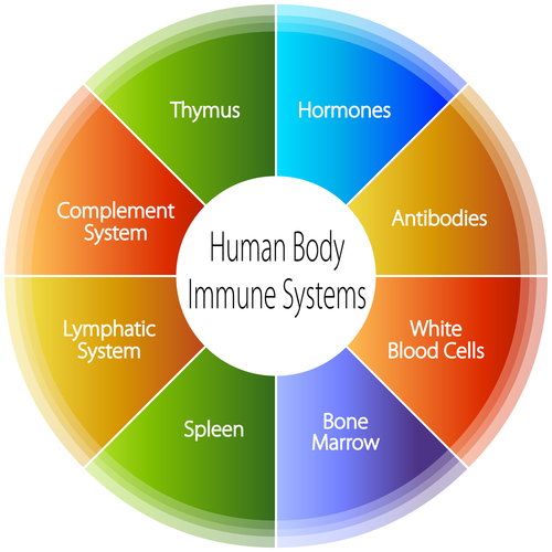 how does the immune system work?